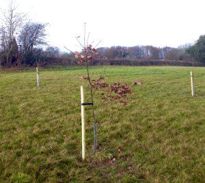 new-trees